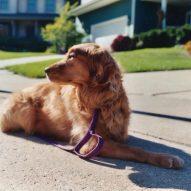 O czym pamiętać przy budowaniu budy dla psa?